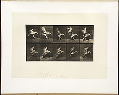Animal locomotion. Plate 775 (Boston Public Library).jpg