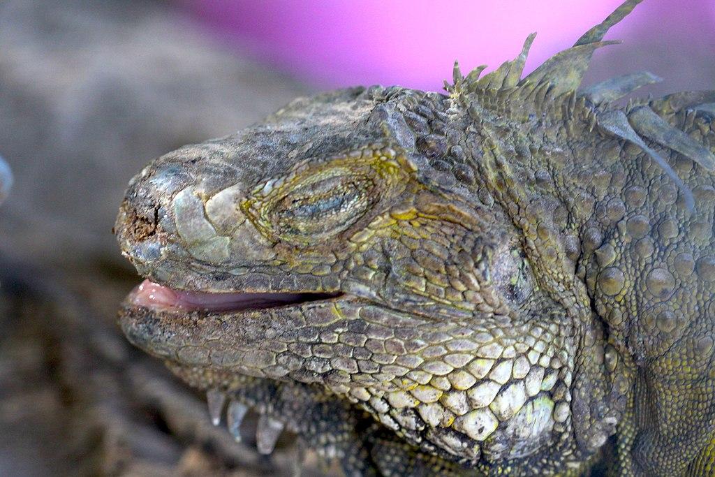 1024px-Animals_in_Thailand_Photographs_by_Peak_Hora_%2826%29.jpg