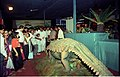 Ankylosaurus - Dinosaurs Alive Exhibition - Science City - Calcutta 1995 June-July 103.JPG