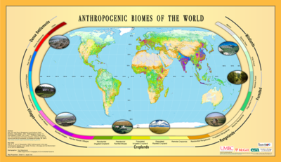 which terrestrial biome is called the breadbasket of the world