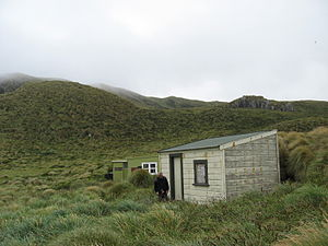 Old Castaway hut in the North of Antipodes Isl...