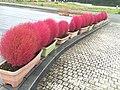 Antlers Red (21637121484).jpg