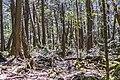 Aokigara forest near wind cave 07.jpg