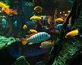 Aquarium Scene (5858618580).jpg