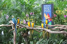 "Blue-and-yellow Macaws perching on branches in front of a sign stating ""Jurong Bird Par"", with orchids and palm trees in the background."