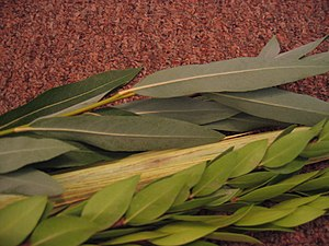 Aravah (Sukkot) - The two aravot branches of the Four Species (rear), along with the lulav (center) and hadassim branches (fore).