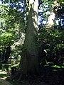 Arboretum, Kórnik 2010 (10).jpg