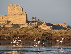 Atlit fortress and Flamingo.JPG