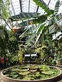 Auckland domain wintergarden tropical house water basin.JPG