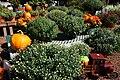 Autumn Display at Garden Shop - 50495436671.jpg