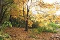 Autumn Landscape - panoramio.jpg