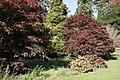 Autumn Reds, Batsford Arboretum - geograph.org.uk - 1527787.jpg