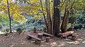 Autumn season in Butanic Garden فصل پاییز در باغ بوتانیکال تفلیس 50.jpg