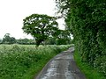 Baileywood Lane - geograph.org.uk - 177756.jpg
