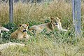 Bangabondhu Safari Park.jpg