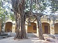 Banyan Tree With Bell Gate Of God (37034866).jpeg