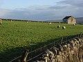 Barn, walls and sheep, Teesdale - geograph.org.uk - 273442.jpg