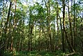 Barnsnap Wood - geograph.org.uk - 1288857.jpg