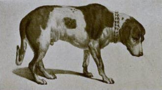 Barry (dog) - A drawing of Barry, preserved at the Natural History Museum of Bern prior to the modifications conducted in 1923.
