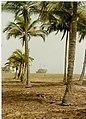 Bateau échoué sur une plage en Côte d'Ivoire.Vers 1991.jpg