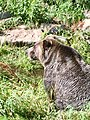 Bear (31281753088).jpg