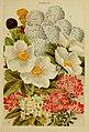 Beautiful flowering trees and shrubs for British and Irish gardens (1903) (20170768920).jpg