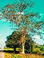 Beautiful skies and tree.jpg