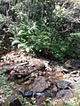 Beautiful stream flows in Sinharaja Rain Forest.jpg
