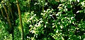 Beauty of nature Tidili.jpg