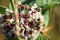 Bee on a flower (4765865435).jpg