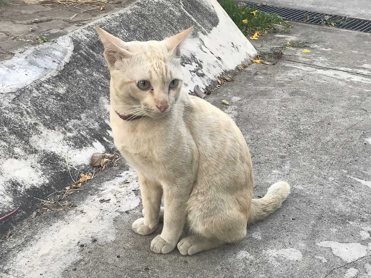 meu gato sumiu, e agora?