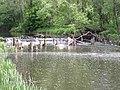 Belarus-Usa River-1.jpg