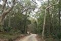 Benandarah NSW 2536, Australia - panoramio (44).jpg