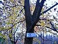 Berezne Forestry College, dendropark 4.jpg