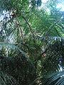 Bet tree.JPG