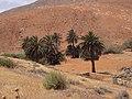 Betancuria, 35637, Las Palmas, Spain - panoramio (153).jpg