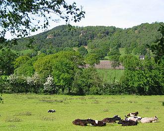 Mid Cheshire Ridge - Raw Head