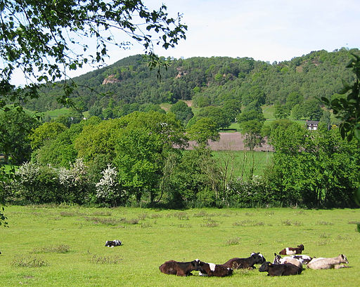 Bickerton Hill