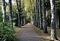 Birch walk Weilerbach Luxembg 01.jpg