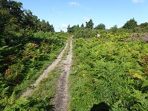 Bixley Heath - Image: Bixley Heath 7