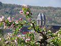 Blüten mit Ockstadt im Hintergrund.jpg