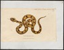 Boa constrictor - 1700-1880 - Print - Iconographia Zoologica - Special Collections University of Amsterdam - UBA01 IZ11900023.tif