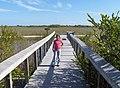 Bobcat Boardwalk in Shark Valley^ - panoramio.jpg