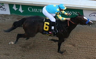 Bodemeister American Thoroughbred racehorse
