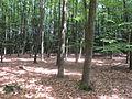 Bos Sallandse Heuvelrug III.JPG