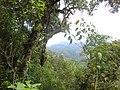 Bosque en la cumbre - panoramio.jpg