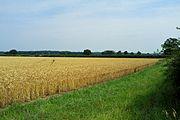 Bosworth Battlefield actual site