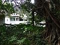 Botanical Garden - Singapore (35302265300).jpg