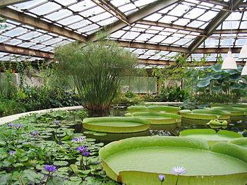 English: Conservatory No 28 of Botanical_Garde...
