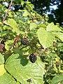 Botanical garden in zugdidi(19).jpg